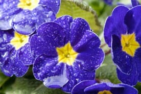 water droplets on flowers