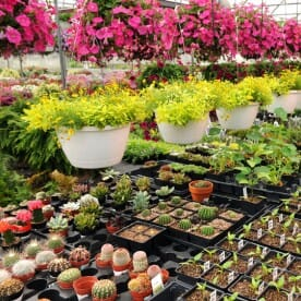 nursery with various plants