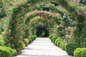 formal rose garden arches
