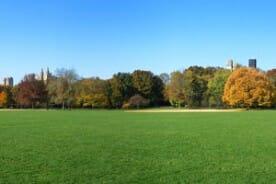 Central Park lawn