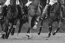 Competitive Polo Game Horsemanship